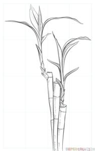 Cómo dibujar un bambú