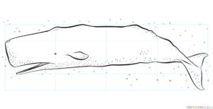 Cómo dibujar un cachalote