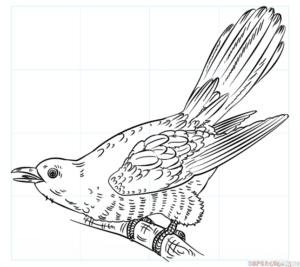 Cómo dibujar un cuco