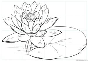 Cómo dibujar un nenúfar y una almohadilla