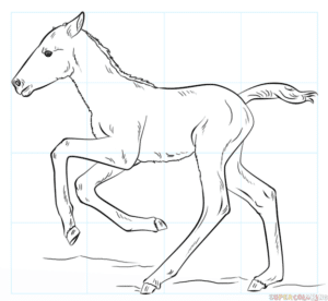 Cómo dibujar un potro