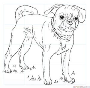 Cómo dibujar un perro puggle