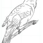 Cómo dibujar un ruiseñor
