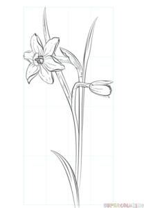 Cómo dibujar una flor de narciso