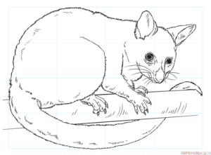 Cómo dibujar una zarigüeya