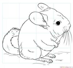 Cómo dibujar una chinchilla