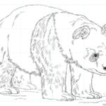 Cómo dibujar un panda gigante