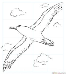 Cómo dibujar un albatros