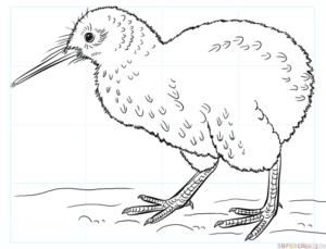 Cómo dibujar un pájaro kiwi