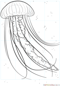 Cómo dibujar una medusa